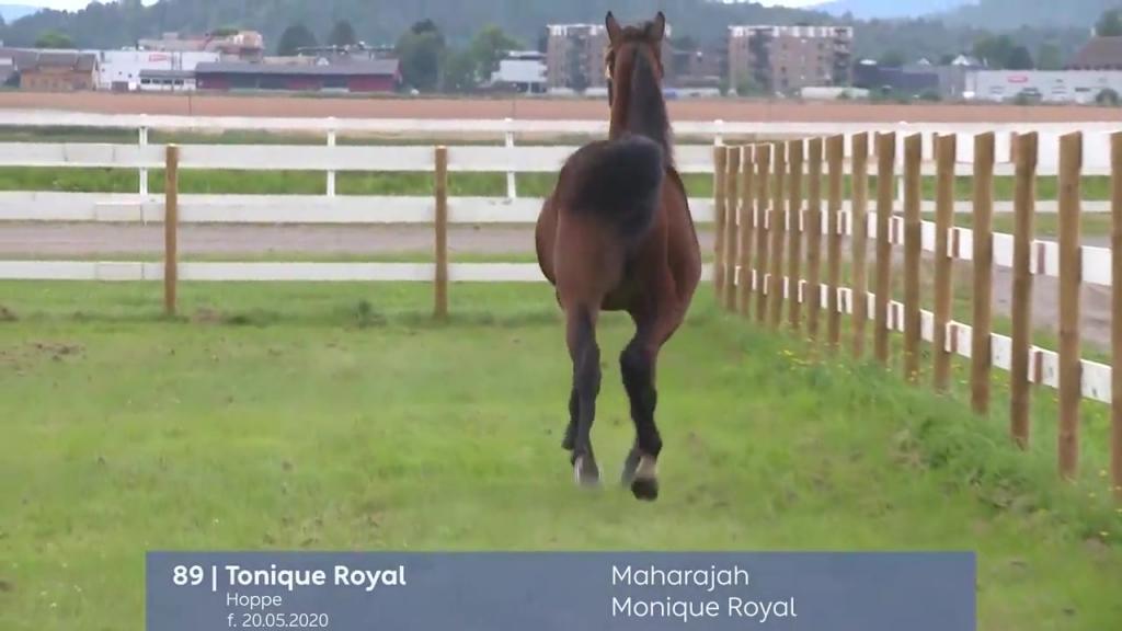 # 89 - Tonique Royal