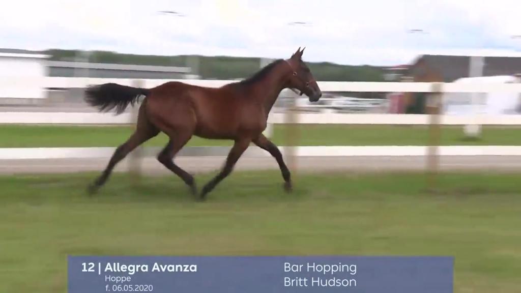# 12 - Allegra Avanza