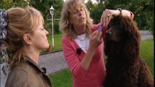 Tandborstning – ett utdrag från filmen Välkommen valp